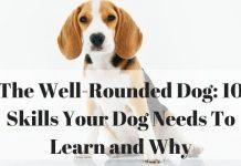 dog skills