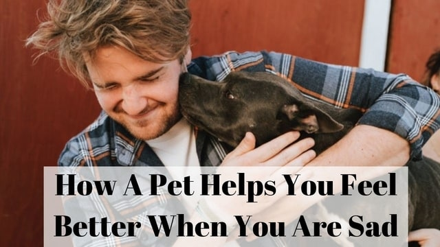 How A Pet Helps You Feel Better When You Are Sad
