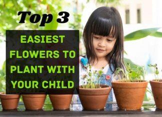 Flower' Decoration Tips